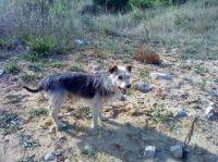 Encontrado perro en la playa de somo