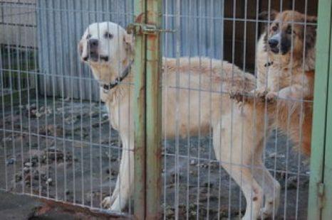 Perros en condiciones p�simas en Gajano