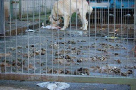 Perros en condiciones p�simas en Gajano 2