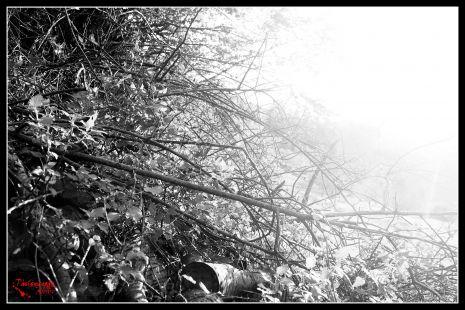 hojas del pasado