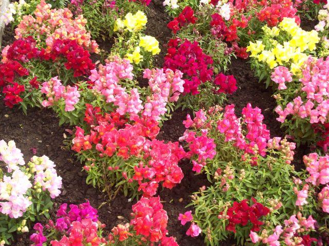 Jardin florido fotos de maratones flora y fauna de cantabria for Jardineria santander