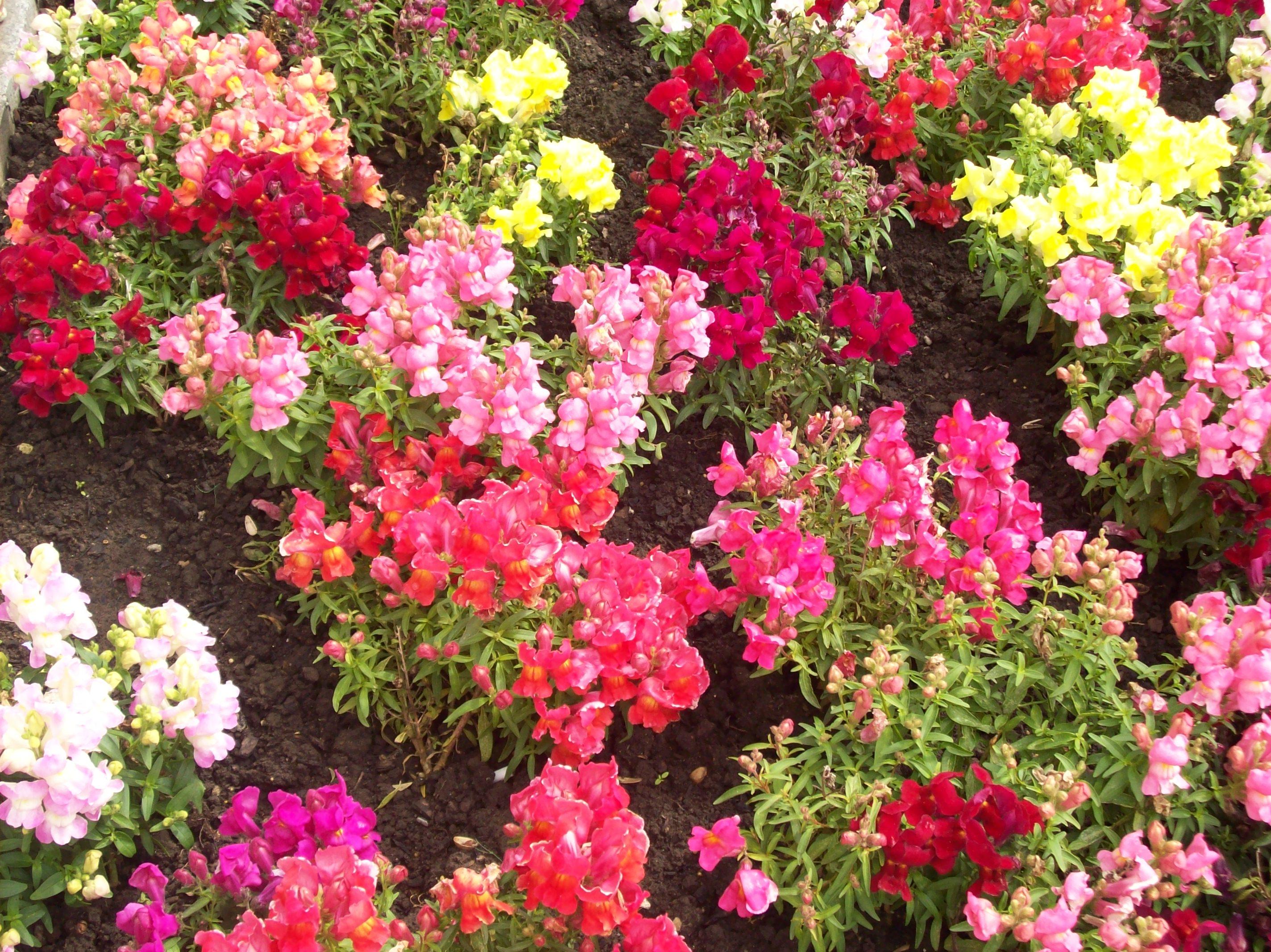 Resultado de imagen para jardín florido