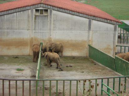 Cabarceno, la casa de los elefantes