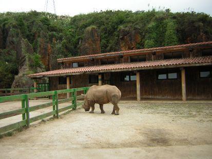 Cabarceno, Rinoceronte