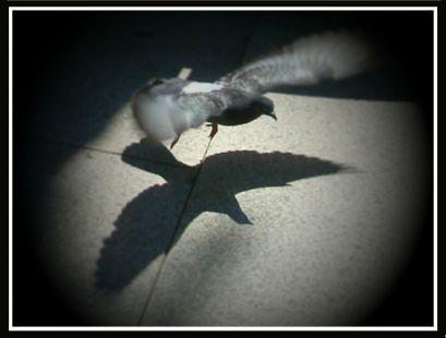 Sombras... al vuelo_1