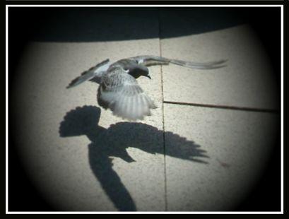Sombras...al vuelo_2