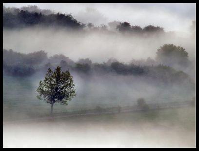 Entre la niebla .