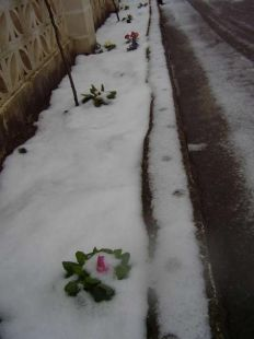 FLORES EN LA NIEVE