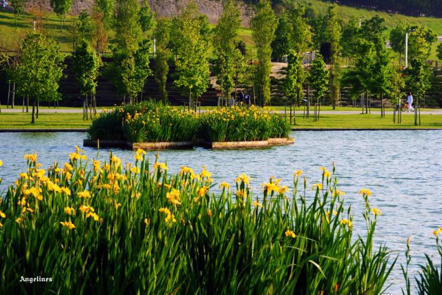 La laguna de las llamas fotos de parques y jardines for Lagunas de jardin