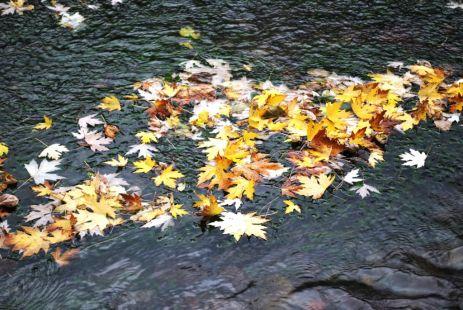 La Caida del otoño