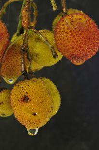 frutos monte buciero