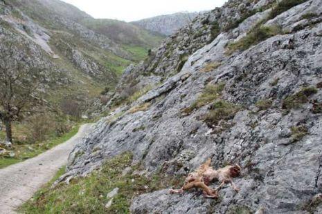 Ataque de lobos en Bejes