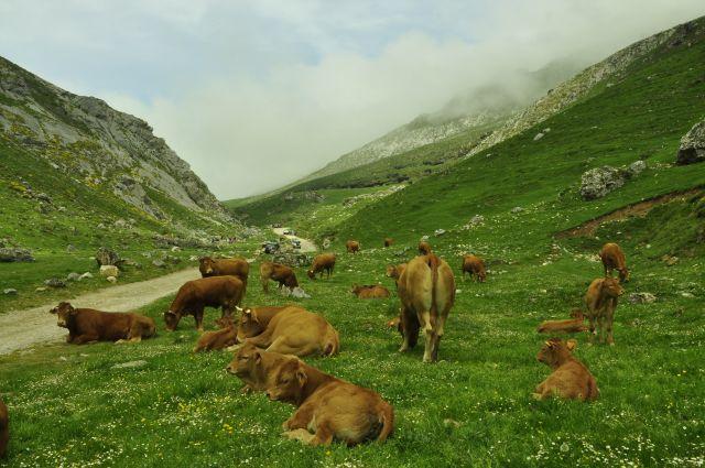 subida de ganado a los puertos