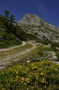camino del macondiu