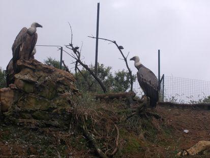 los buitres vigías