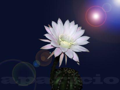Flor de un dia