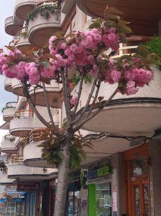 arbol de flores rosas