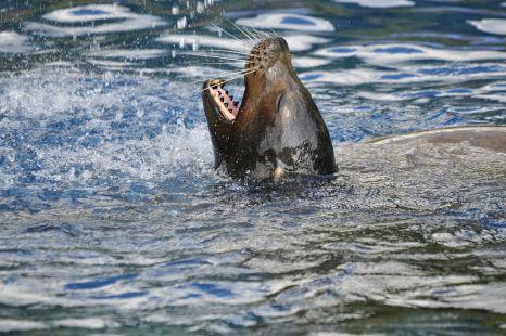 foca cabarceno