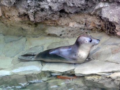 zoo del palacio de la magdalena