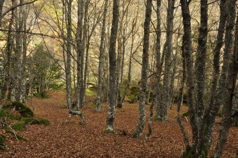 otoño en la sierra de hijar