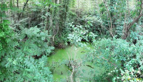 Bosque y pozo cerca del rio Saja