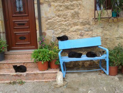 Felinos en Santillana