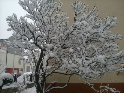 Primavera invernal...