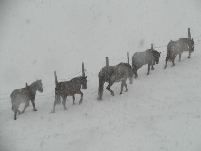 caballos en la nieve