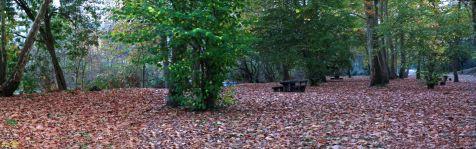 La viesca , en otoño
