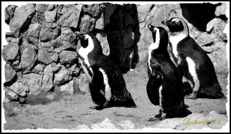Pinguinos del PAlacio de La Magdalena