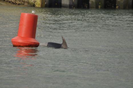 delfin en el puerto
