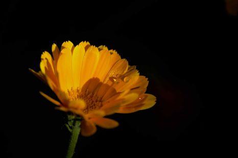 Amarilla con gotas