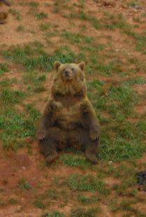 Cabarceno, osos