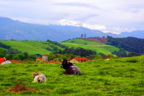 la vaca con su cria