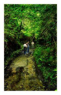 Camino minero (Udias)