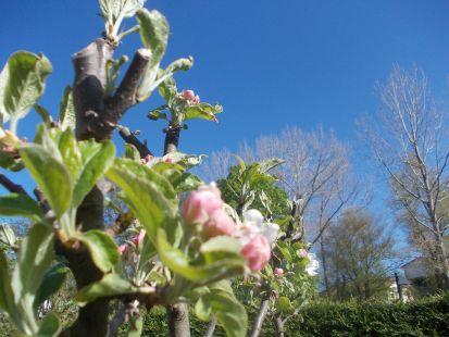 ¡Ya es primavera en Campoó!