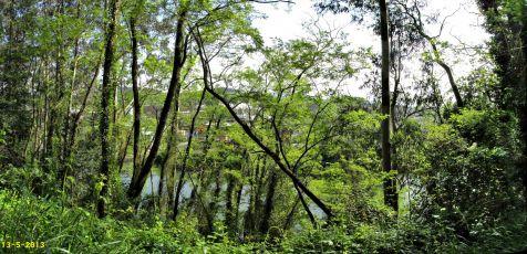 El Saja y el bosque