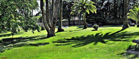 Mataleñas, sombras