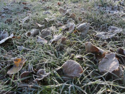 Primera helada del otoño 311013