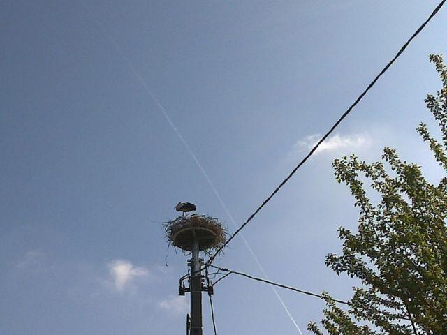 Cigüeñas en Matzenheim