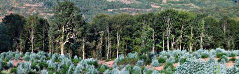Hayedos en el Monte Corona