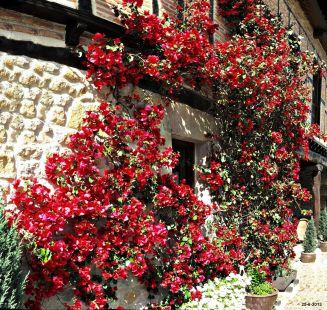 Floreciendo en Santillana