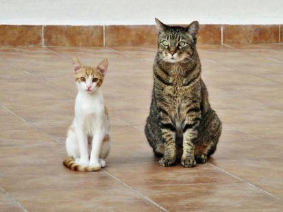 Rufi y Félix os desean un buen día