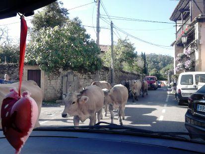 RUILOBA. Prioridad a las vacas