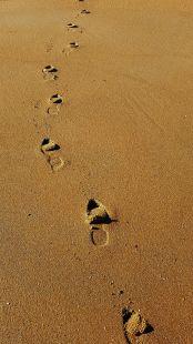 sobre sus pasos