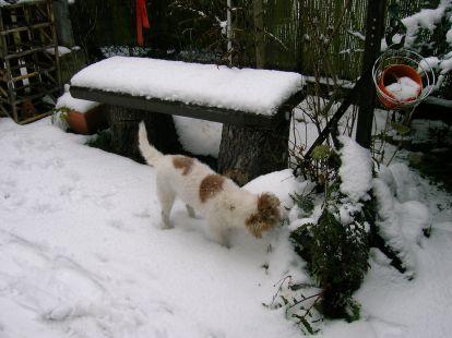 Primera nevada en Koenigshoffen