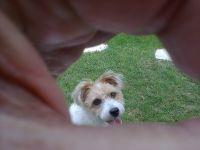 POL mi perrito cantabro