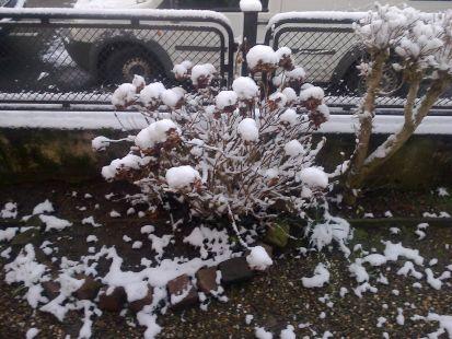 Nieve en Koenigshoffen